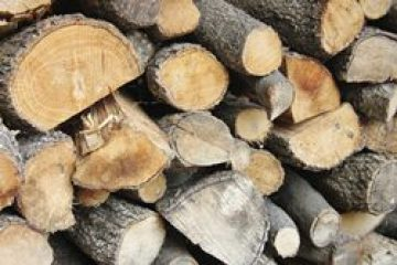 היכן ניתן למצוא עצים לצורך עיצוב הבית